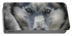Portable Battery Charger featuring the photograph Sled Dog  by Dennis Baswell