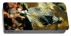Portable Battery Charger featuring the photograph Smooth Trunkfish by Amy McDaniel