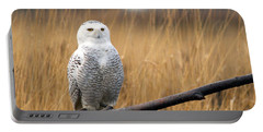 Snowy Owl On Branch Portable Battery Charger