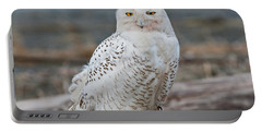Snowy Owl Watching From A Driftwood Perch Portable Battery Charger
