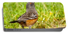 Spotted Towhee Looking Up Portable Battery Charger