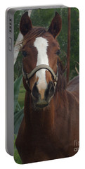 Portable Battery Charger featuring the photograph Stared Down by Peter Piatt
