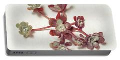 Succulent Plant 1 Portable Battery Charger