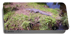 Portable Battery Charger featuring the photograph Sunny Gator  by Joseph Baril