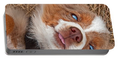 Portable Battery Charger featuring the photograph Sweet Australian Shepherd Puppy Face Art Prints by Valerie Garner