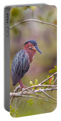 The Green Heron At Blue Hole Portable Battery Charger