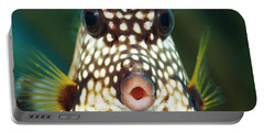 The Smooth Trunkfish  Lactophrys Portable Battery Charger