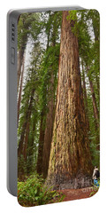 The Survivor - Massive Redwoods Sequoia Sempervirens In Redwoods National Park Named Stout Tree. Portable Battery Charger