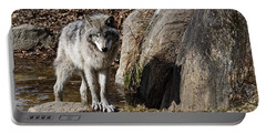 Portable Battery Charger featuring the photograph Timber Wolf In Pond by Wolves Only