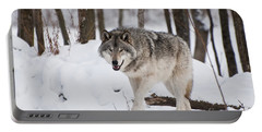 Portable Battery Charger featuring the photograph Timber Wolf In Winter Forest by Wolves Only