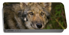 Timber Wolf In Denali Portable Battery Charger