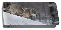 Portable Battery Charger featuring the photograph Timber Wolf On Hill by Wolves Only