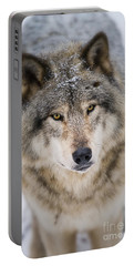 Timber Wolf Pictures 254 Portable Battery Charger