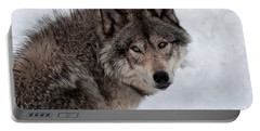 Portable Battery Charger featuring the photograph Timberwolf At Rest by Bianca Nadeau