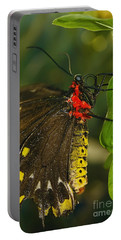 Portable Battery Charger featuring the photograph Troides Helena Butterfly  by Olga Hamilton