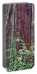 Trunk Of Coastal Redwood In Armstrong Redwoods State Preserve Near Guerneville-ca Portable Battery Charger