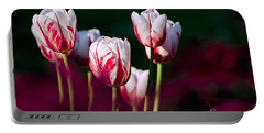 Portable Battery Charger featuring the photograph Tulips Garden Flowers Color Spring Nature by Paul Fearn
