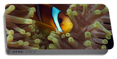 Two-banded Anemonefish Red Sea Egypt Portable Battery Charger
