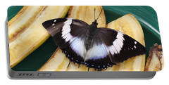 Violet-spotted Charaxes Butterfly Portable Battery Charger