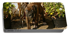 Portable Battery Charger featuring the photograph Was I Bad? by Carol Lynn Coronios