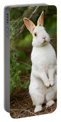 What's Up Doc Portable Battery Charger
