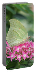 Portable Battery Charger featuring the photograph White Angled Sulphur by Judy Whitton