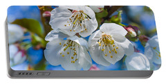 White Cherry Blossoms Blooming In The Springtime Portable Battery Charger