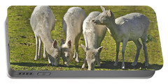White Fallow Deer Mt Madonna County Park Portable Battery Charger