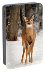 Whitetail In Snow Portable Battery Charger by Christina Rollo