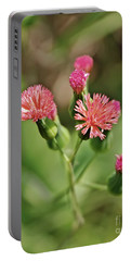 Portable Battery Charger featuring the photograph Wild Flower by Olga Hamilton