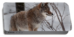 Portable Battery Charger featuring the photograph Winter Coyote by Bianca Nadeau