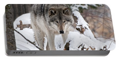 Portable Battery Charger featuring the photograph Winter Timber Wolf by Wolves Only