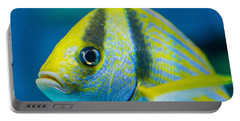 Atlantic Porkfish Portable Battery Charger