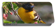 Young Male Oriole Portable Battery Charger by Bruce Bley