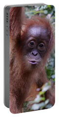 Young Orangutan Kiss Portable Battery Charger