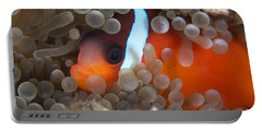 Cinnamon Clownfish In Its Host Anemone Portable Battery Charger