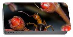 Curious Ant Portable Battery Charger by Shannon Harrington