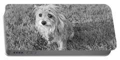 Portable Battery Charger featuring the photograph Gremlin by Jeannette Hunt