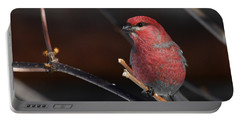 Male Pine Grosbeak Portable Battery Charger
