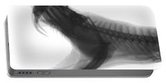 Eastern Diamondback Rattlesnake, X-ray Portable Battery Charger by Ted Kinsman