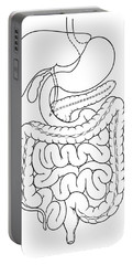 Illustration Of Abdomen Portable Battery Charger