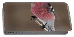 Pine Grosbeak Portable Battery Charger