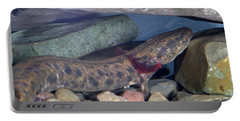 Mudpuppy Portable Battery Charger by Ted Kinsman