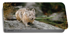 Portable Battery Charger featuring the photograph American Pika by Doug Herr