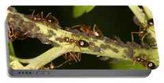 Ants Tending Aphids Portable Battery Charger by Ted Kinsman