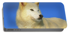 Arctic Wolf Canis Lupus Portrait Portable Battery Charger