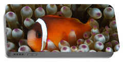 Black Anemonefish, Fiji Portable Battery Charger
