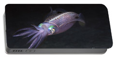 Caribbean Reef Squid At Night On Reef Portable Battery Charger