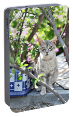 Portable Battery Charger featuring the photograph Cat Of Mykonos by Laura Melis
