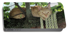 Portable Battery Charger featuring the photograph Catnap Time by Thomas Woolworth